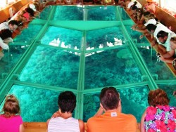 Glass Bottom Boat Trip in Sharm El sheikh