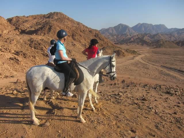 sharm el sheikh horse riding trips